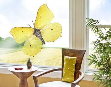 Fensterfolie - Fenstersticker - No.512 Zitronenfalter - Fensterbilder Frühling