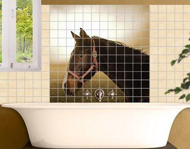 Fliesenbild - Early Horse