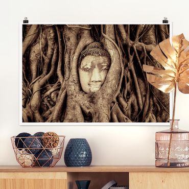 Poster - Buddha in Ayutthaya von Baumwurzeln gesäumt in Braun - Querformat 2:3