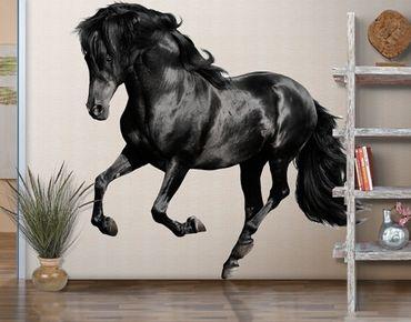 Wandtattoo Pferd No.649 Araberhengst