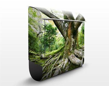 Wandbriefkasten - Alter Baum - Briefkasten Grün