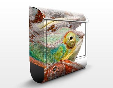 Briefkasten mit Zeitungsfach - Bunte Chamäleon - Briefkasten mit Tiermotiv