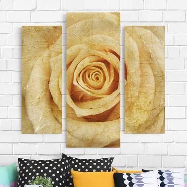 Leinwandbild 3-teilig - Vintage Rose - Galerie Triptychon