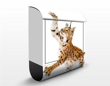 Briefkasten mit Zeitungsfach - Lurking Lynx - Briefkasten mit Tiermotiv