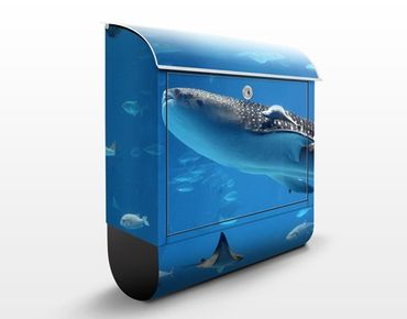 Briefkasten mit Zeitungsfach - Fish in the Sea - Briefkasten mit Tiermotiv
