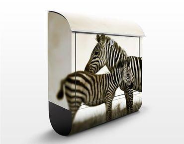 Briefkasten mit Zeitungsfach - Zebrapaar - Briefkasten mit Tiermotiv