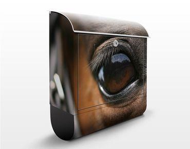 Briefkasten mit Zeitungsfach - Horse Eye - Briefkasten mit Tiermotiv
