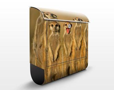 Briefkasten mit Zeitungsfach - Meerkat Family - Briefkasten mit Tiermotiv