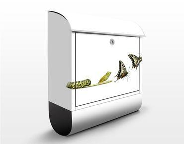 Briefkasten mit Zeitungsfach - Metamorphose - Briefkasten mit Tiermotiv