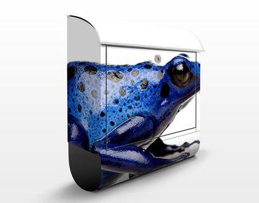 Briefkasten mit Zeitungsfach - Exotischer Frosch - Briefkasten mit Tiermotiv