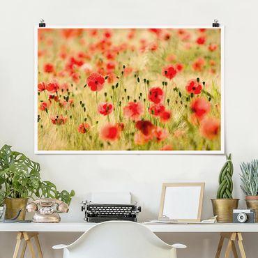 Poster - Summer Poppies - Querformat 2:3