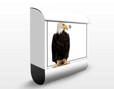 Briefkasten mit Zeitungsfach - No.379 Eye Of The Eagle - Briefkasten mit Tiermotiv