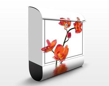 Briefkasten mit Zeitungsfach - Flamy Orchid Waters - Briefkasten Blumen