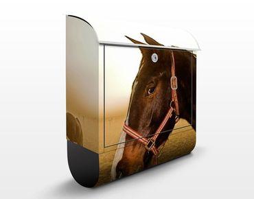 Briefkasten mit Zeitungsfach - Early Horse - Briefkasten mit Tiermotiv