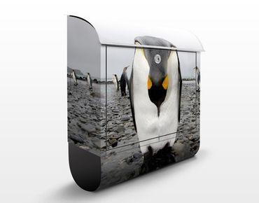 Briefkasten mit Zeitungsfach - Pinguin - Briefkasten mit Tiermotiv