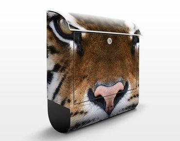Briefkasten mit Zeitungsfach - Tiger Eyes - Briefkasten mit Tiermotiv