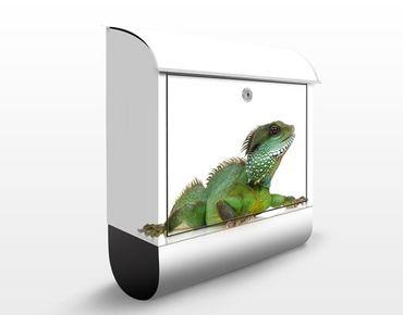 Briefkasten mit Zeitungsfach - Grüner Leguan I - Briefkasten mit Tiermotiv
