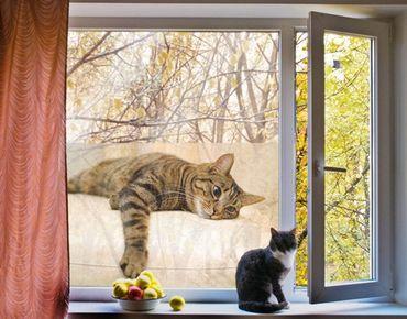 Fensterfolie - Sichtschutz Fenster Cat Chill Out - Fensterbilder