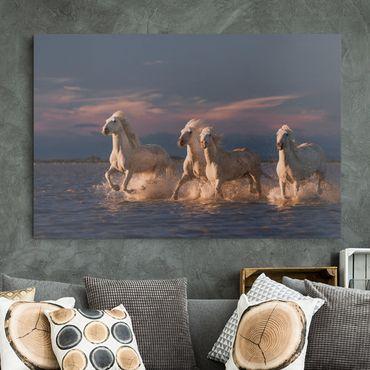 Leinwandbild - Wilde Pferde in Kamargue - Querformat 2:3