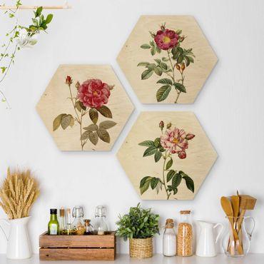 Hexagon Bild Holz 3-teilig - Pierre Joseph Redouté - Rosen