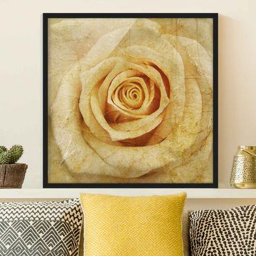 Bild mit Rahmen - Vintage Rose - Quadrat 1:1