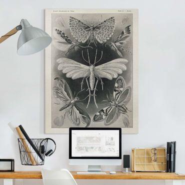 Leinwandbild - Vintage Lehrtafel Motten und Falter - Hochformat 4:3