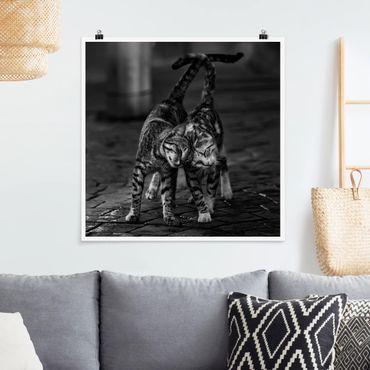 Poster - Kätzchenfreundschaft - Quadrat 1:1
