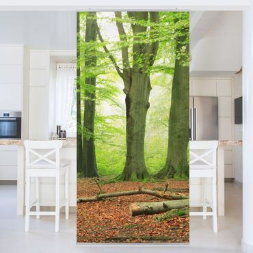 Raumteiler - Mighty Beech Trees 250x120cm