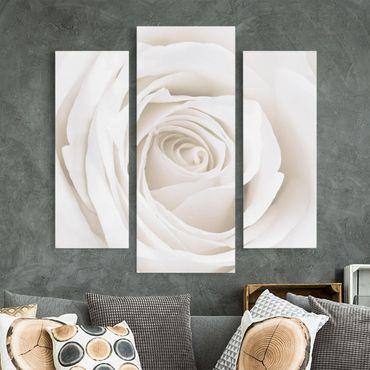 Leinwandbild 3-teilig - Pretty White Rose - Galerie Triptychon