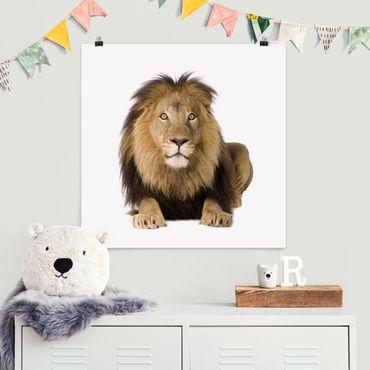 Poster - König Löwe II - Quadrat 1:1