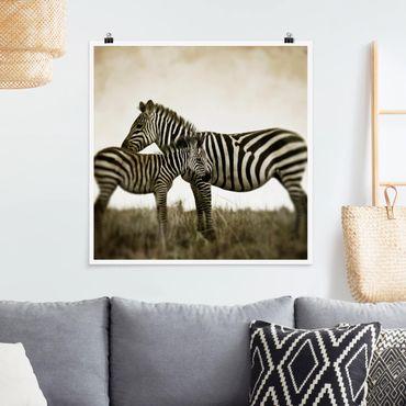 Poster - Zebrapaar - Quadrat 1:1