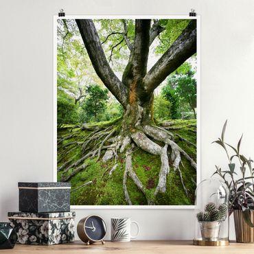 Poster - Alter Baum - Hochformat 3:4