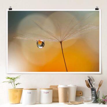 Poster - Pusteblume in Orange - Querformat 2:3