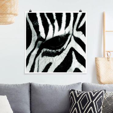 Poster - Zebra Crossing - Quadrat 1:1