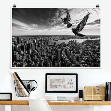 Poster - Tauben auf dem Empire State Building - Querformat 2:3