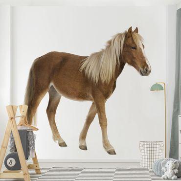 Fototapete - Pony - Fototapete