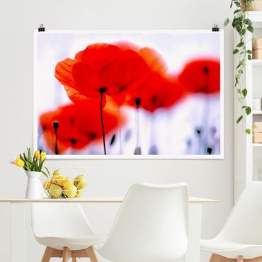 Poster - Magic Poppies - Querformat 2:3