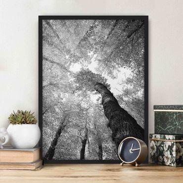 Bild mit Rahmen - Bäume des Lebens II - Hochformat 3:4