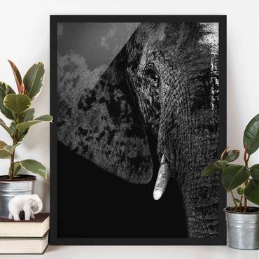 Bild mit Rahmen - Afrikanischer Elefant schwarz-weiß - Hochformat 3:4