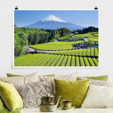 Poster - Teefelder vor dem Fuji - Querformat 2:3