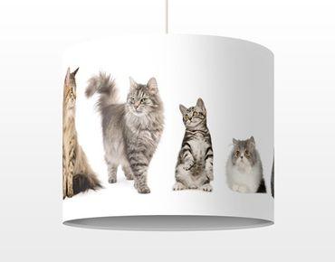 Hängelampe - Katzenbande
