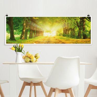 Poster - Autumn Avenue - Panorama Querformat