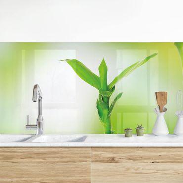 Küchenrückwand - Grüner Bambus