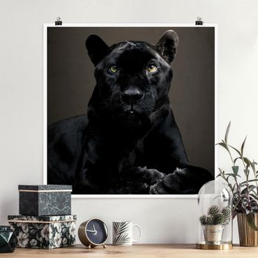 Poster - Black Puma - Quadrat 1:1