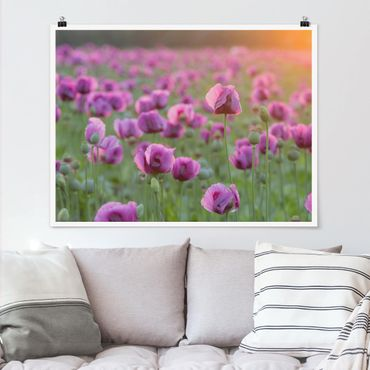 Poster - Violette Schlafmohn Blumenwiese im Frühling - Querformat 3:4