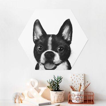 Hexagon Bild Forex - Illustration Hund Boston Schwarz Weiß Malerei