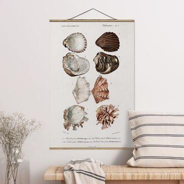 Stoffbild mit Posterleisten - Vintage Lehrtafel Acht Muscheln Rose Creme - Hochformat 3:2