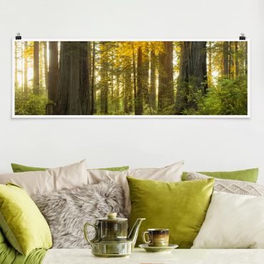 Poster - Redwood National Park - Panorama Querformat