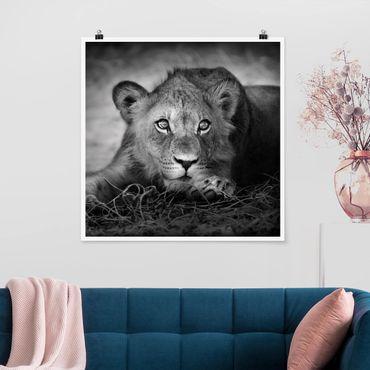 Poster - Lurking Lionbaby - Quadrat 1:1