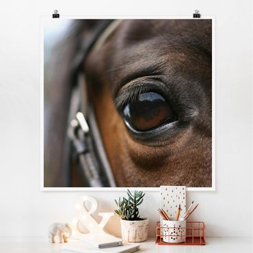 Poster - Horse Eye No.3 - Quadrat 1:1